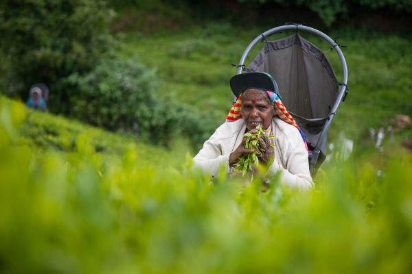 A tea picker at a plantation near Ella in Sri Lanka.