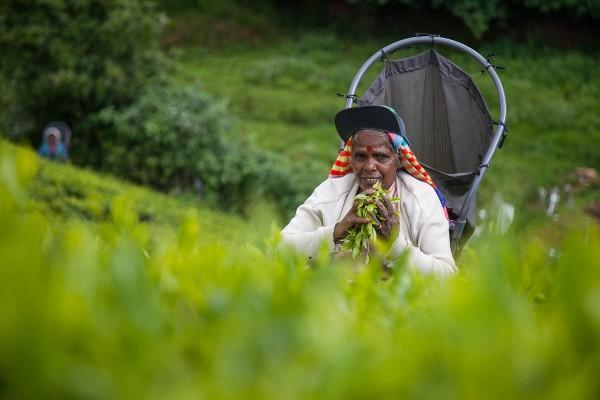 A tea picker at a plantation near Ella in Sri Lanka.