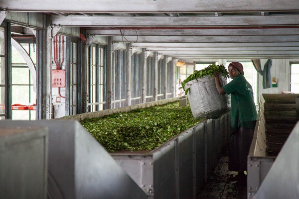 A tea factory near Ella, Sri Lanka.