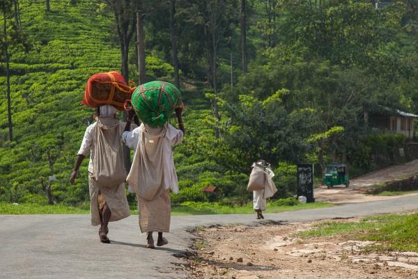 Tea pickers carrying their harvest near Ella, Sri Lanka.