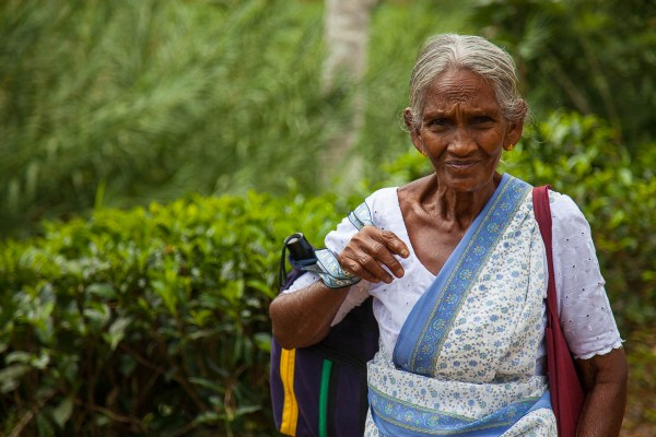 Tea picker in Ella, Sri Lanka.