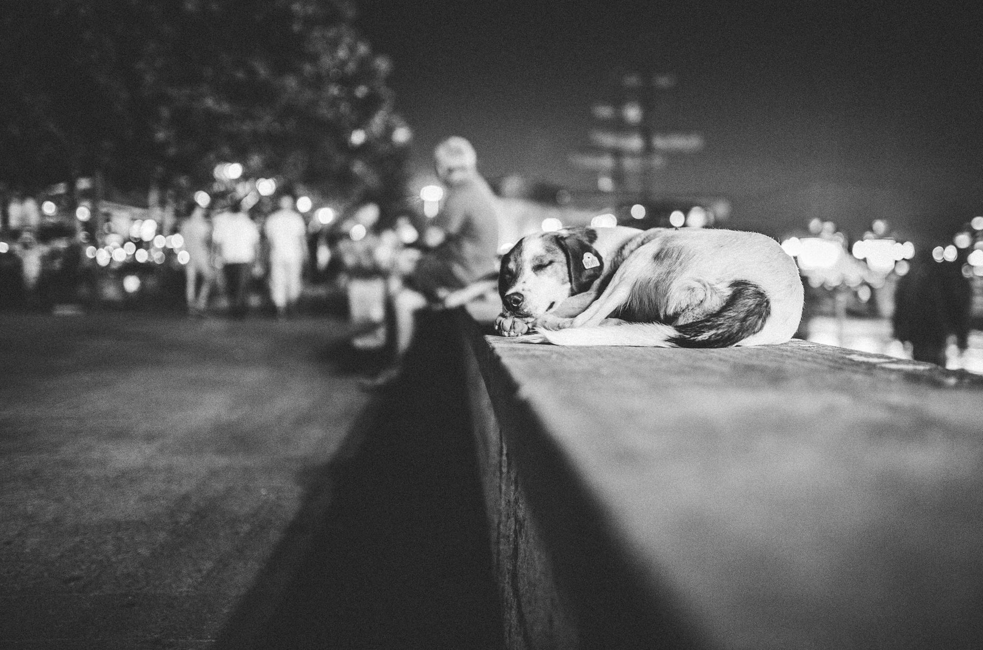 A street dog lying on a bench in Skopje, Macedonia.