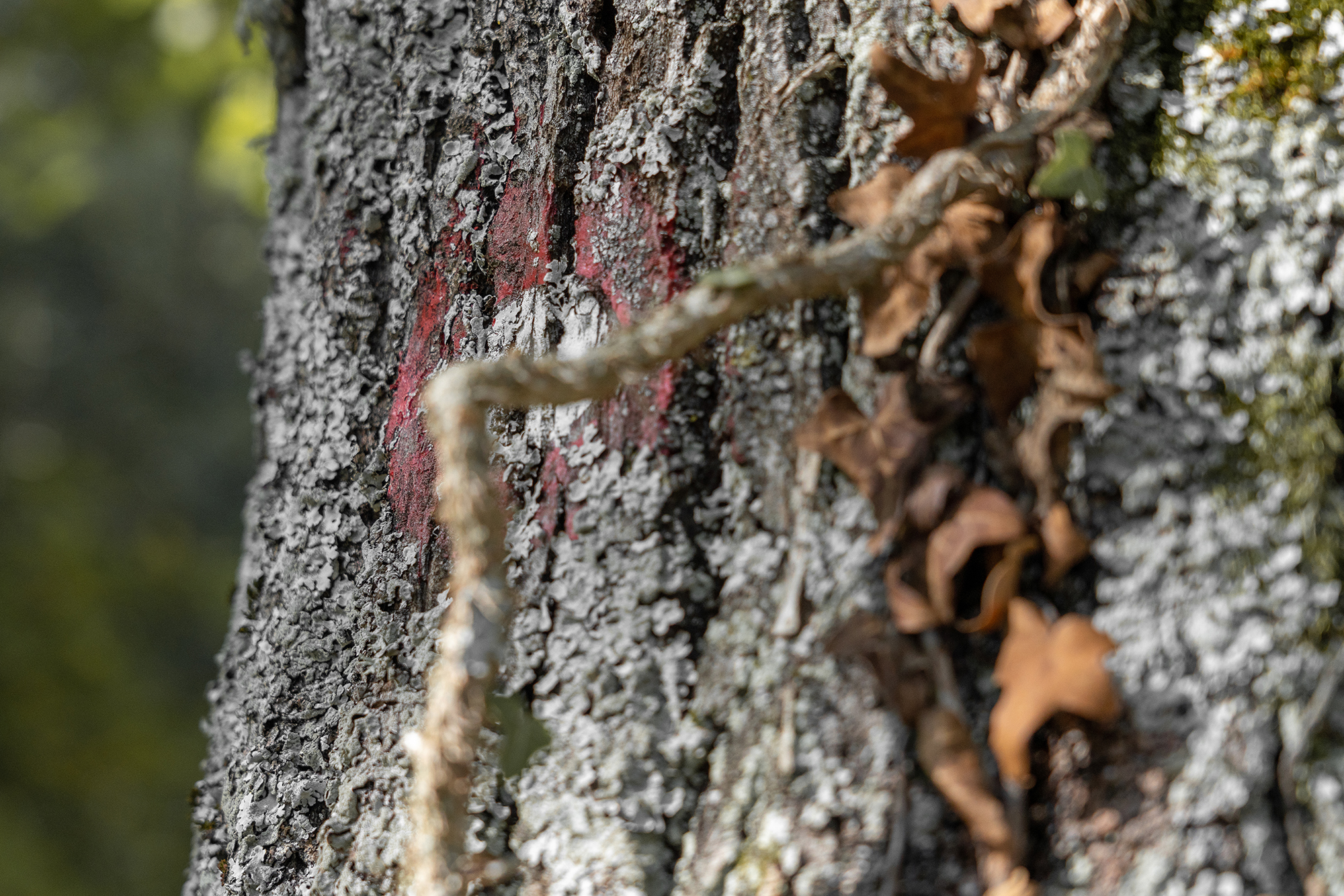 September 29, 2018 - Zasavska Sveta gora: Photo from a hike from Vace to Zasavska Sveta gora in Slovenia - a mark on a tree.